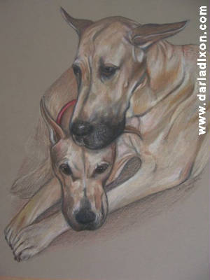 great danes colored pencil portraits art