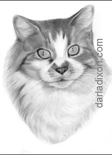 pencil portrait cat fur drawing drawn
